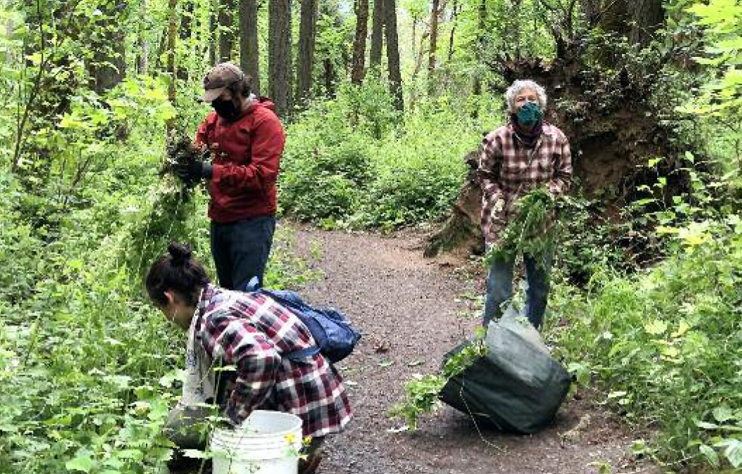 Adopt a Forest Plot and Make a Difference