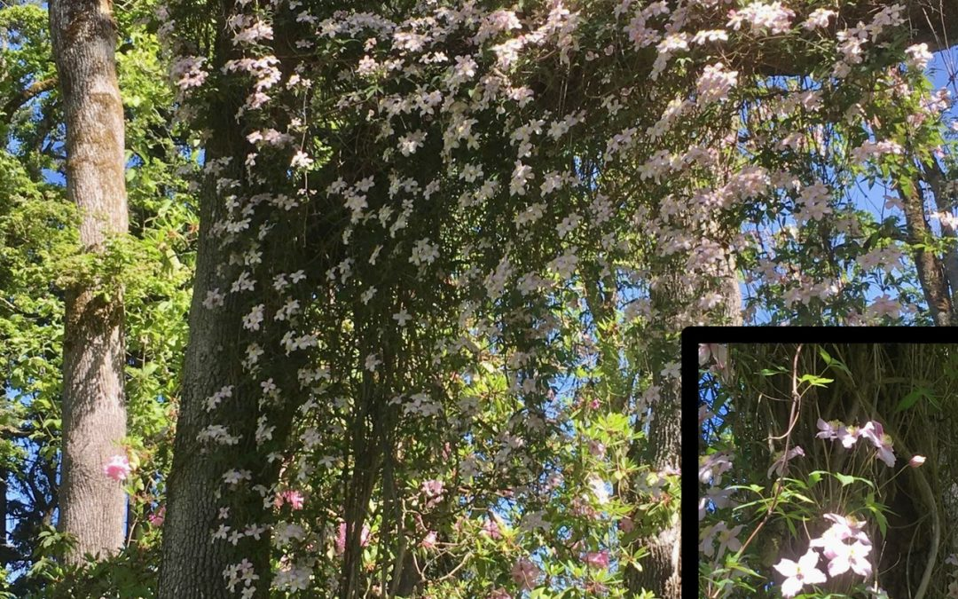 What's Bloomin': May, 2021